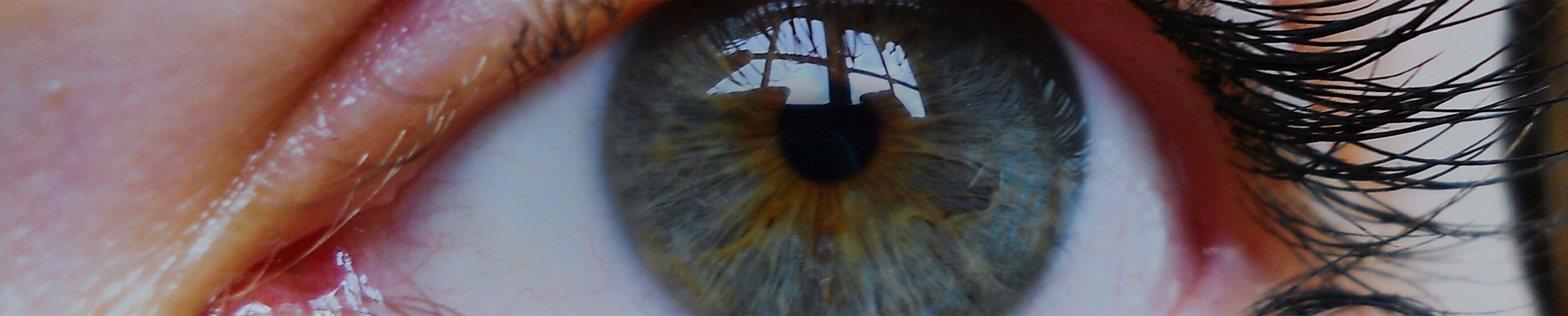 Closeup of a woman's eye