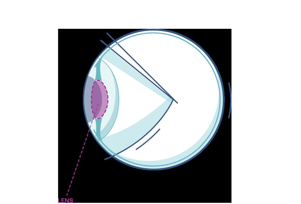 Illustration showing the eye's Lens.